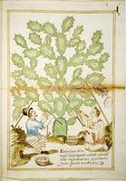 Cultivation of Cochineal
